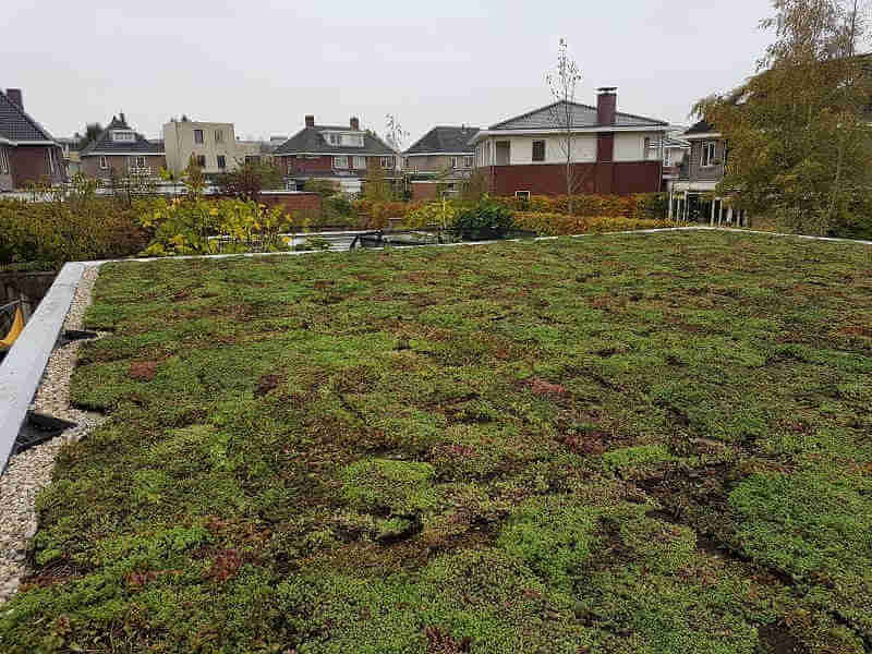 Groen dak huis bouwen